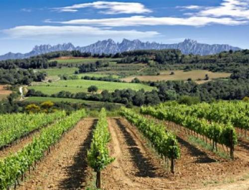Los beneficios del vino – Vinos ecológicos