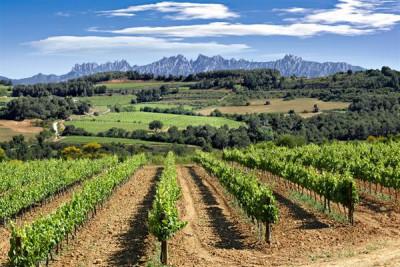 vino-ecologico